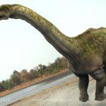 Apatosaurus rearing up to feed