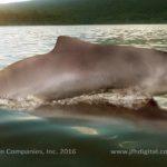 Baiji River Dolphin
