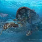 Anomalcaris hunting down Opabinia (Cambrian period)