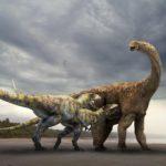 Carcharodontosaurus harrying a Sauropod