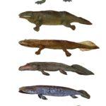 Tetrapodomorpha species showing adaptations of limbs