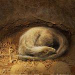 Oryctodromeus asleep in it's burrow